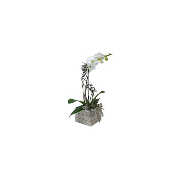 Vaso de Orquídeas Luxo
