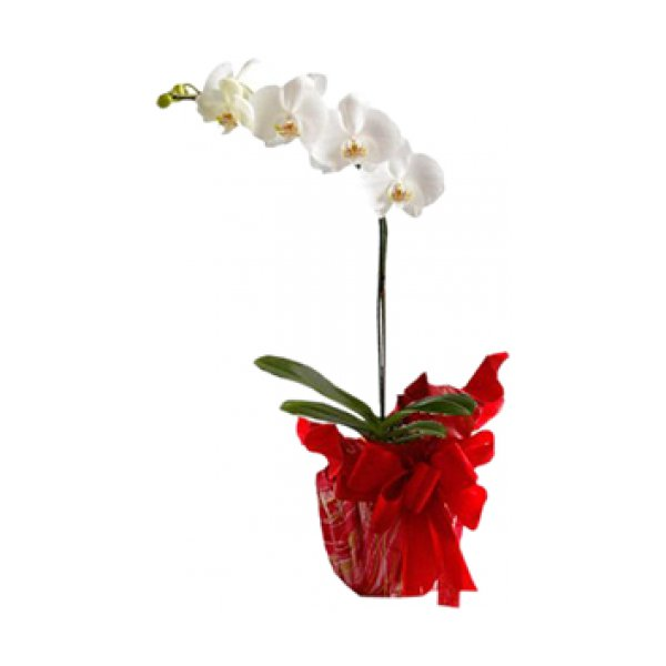 Orquideas Decoradas(Oferta Imbativel)