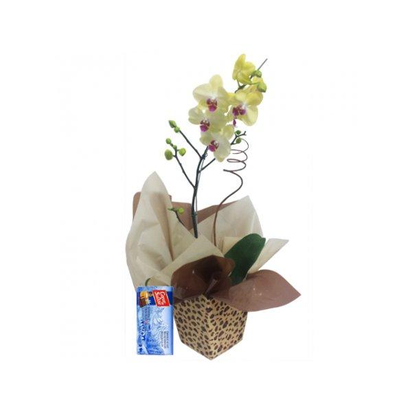 Orquídea para Presente