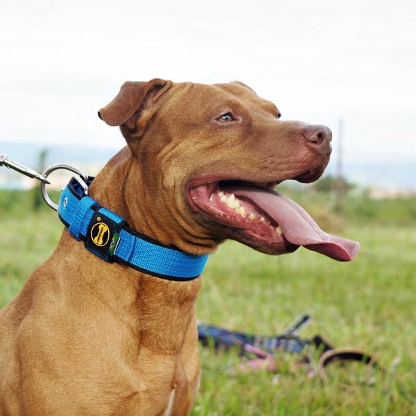 Coleira Para Cachorro Fit Lite (azul e preto)