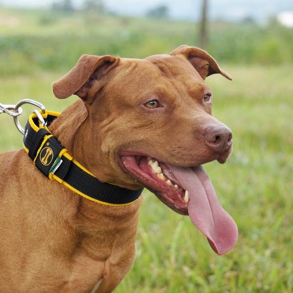 Coleira Para Cachorro Fit Lite (preto e amarelo)