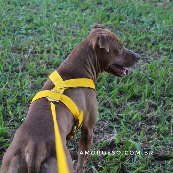 Peitoral Tradicional Amorosso® + Guia Curta 80cm (amarelo e preto)