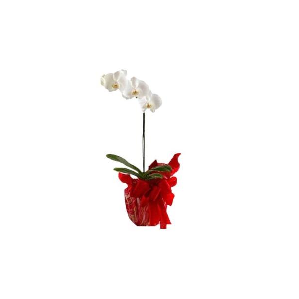 Orquideas Decoradas(Oferta Imbativel)