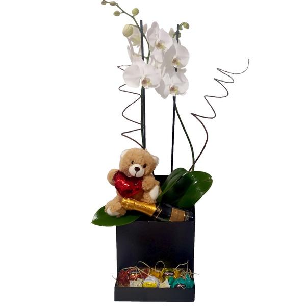 Orquídea Mimos e Chandon