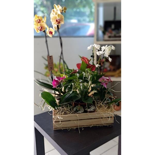 Arranjo Flores e Cores
