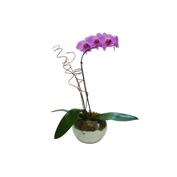 Orquídea no Jardim
