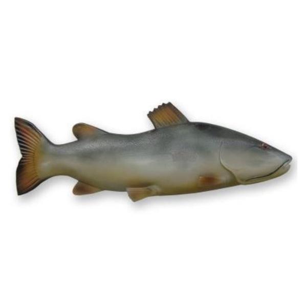 Peixe Pirarara