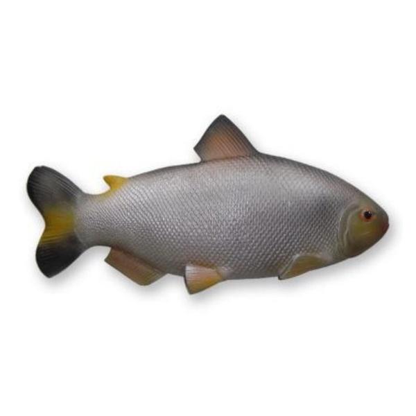 Peixe Matrinxã