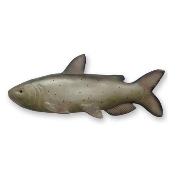 Peixe Cat Fish