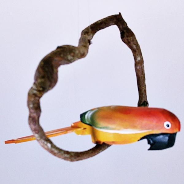 Arara Amarela PP
