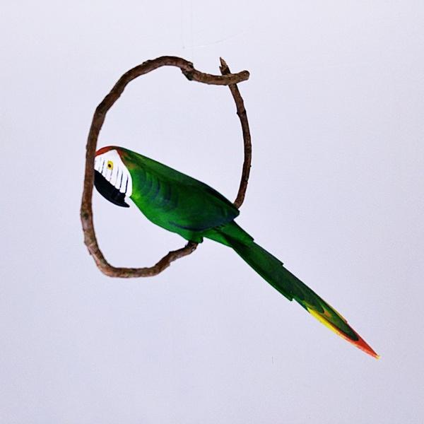 Arara Verde PP