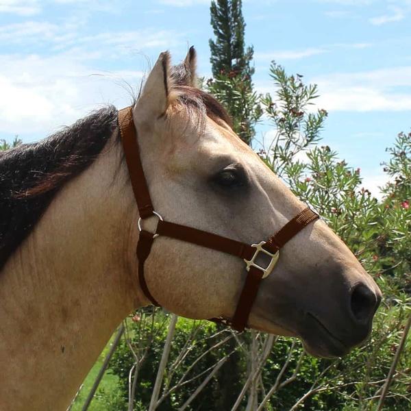 Cabresto para Cavalo Nylon Marrom Boots Horse 3928