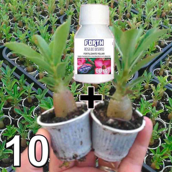 Kit promocional de mudas de rosa do deserto e fertilizante forth flores