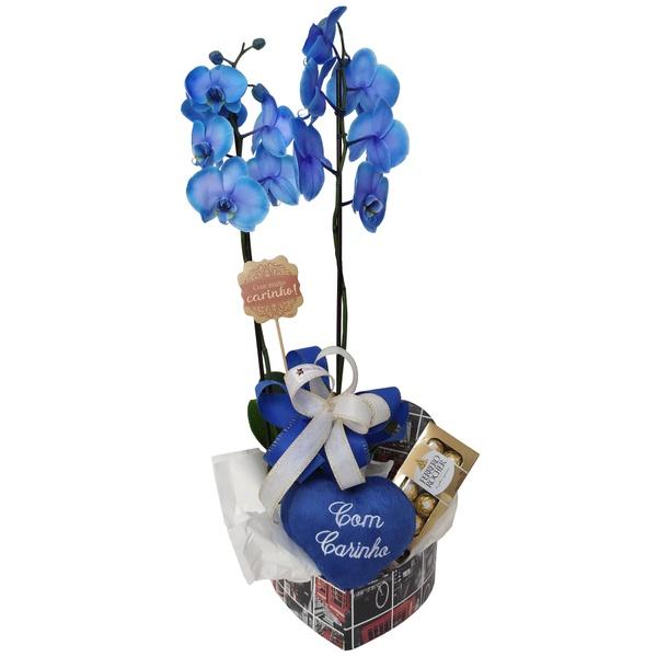 Orquídea Phalaenopsis azul para presente com coração de pelúcia e ferrero rocher