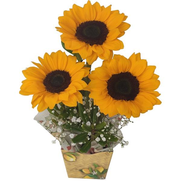 Arranjo flor de girassol, composto por 3 girassóis no floral